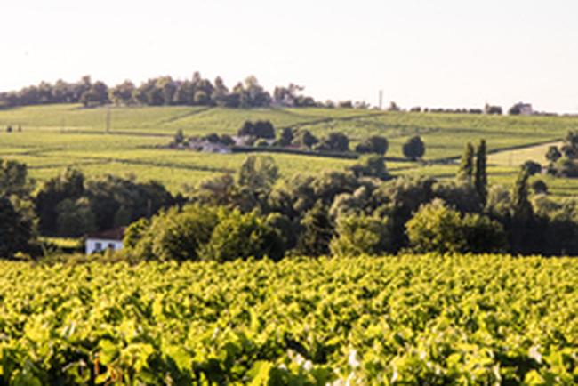 Bordeaux et Côtes